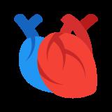 Anatomisches Herz icon