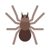 Spider Isolated icon