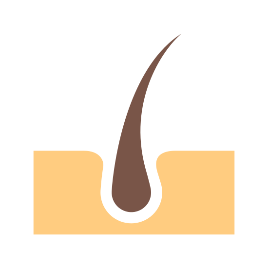 Skin icon. The icon is a simplified depiction of a hair follicle embedded in skin, in profile. The hair is represented by a tear shaped figure whose point extends high up above the skin. The skin is a rectangular base with a concave opening where the hair follicle sits. The icon represents the human skin.