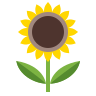 Sunflower icon