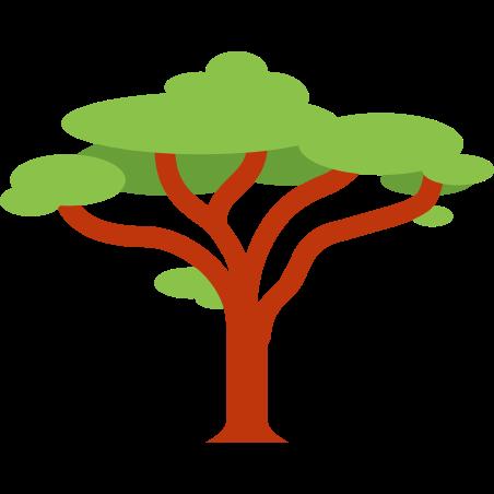 Acacia icon in Color