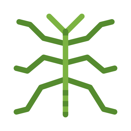 Phasmatodea icon