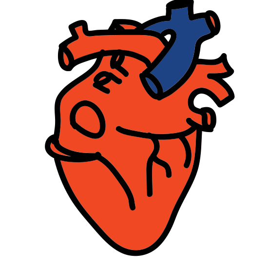 Serce medyczne icon. This is an icon representing a medical heart. It is a more realistic view of a heart, showing arteries and a correct heart shape which looks like a peach. The arteries poke out from the top of the heart.