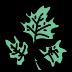 Salade icon
