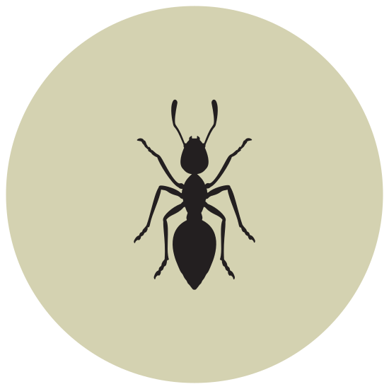 Ant icon. The icon has 3 horizontal oval like shapes connected to one another. The middle oval had six L shaped lines sticking out of it, three on each six. The top oval has 2 smaller L shaped lines and and top points sticking out the top center of it.