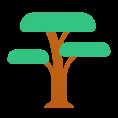 Acacia icon in Fluency