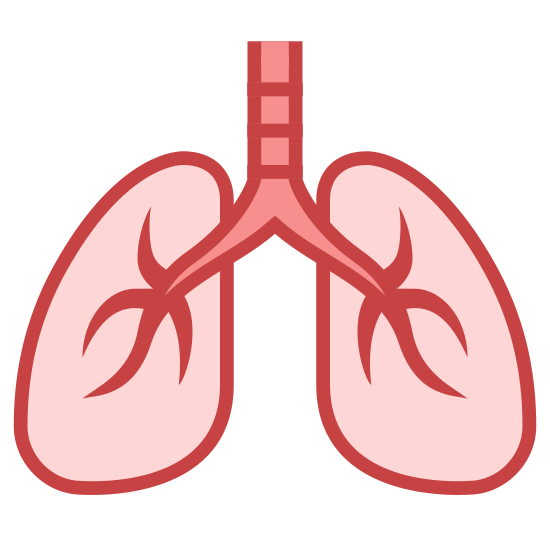 Płuca icon. This picture is of the icon Lungs. It shows two lungs, which are similar to an extended oval shape. The lungs are connected to the wind pipe which goes upward in between each lung.