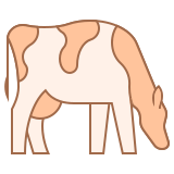 Cow Breed icon
