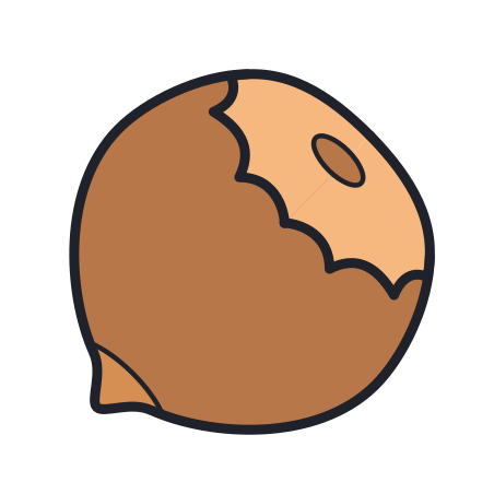 Hazelnut icon in Color Hand Drawn